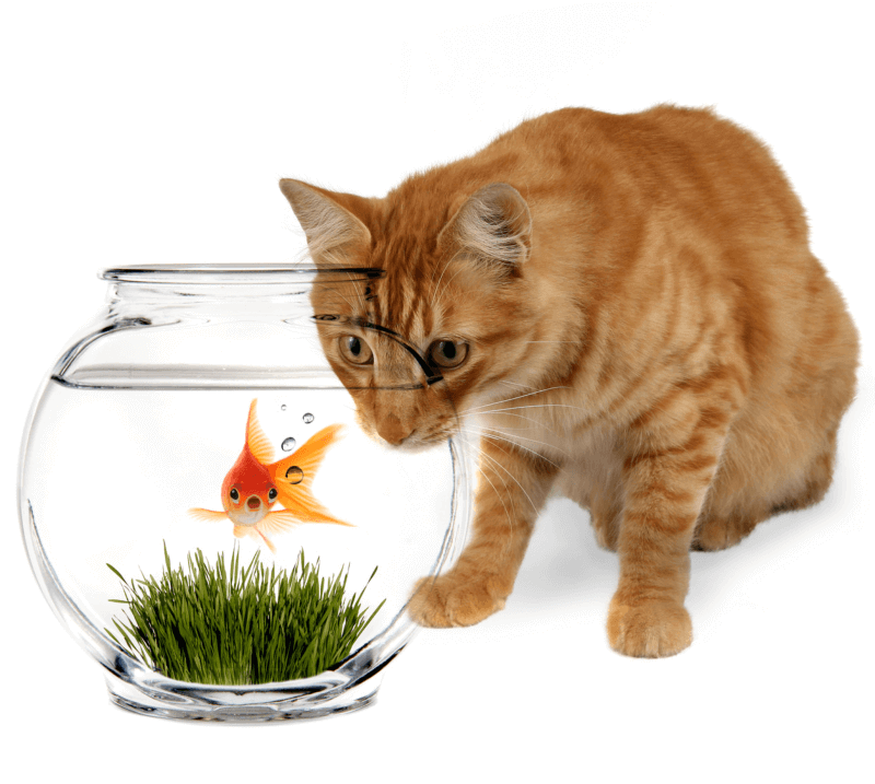 cat-and-fish-cropped