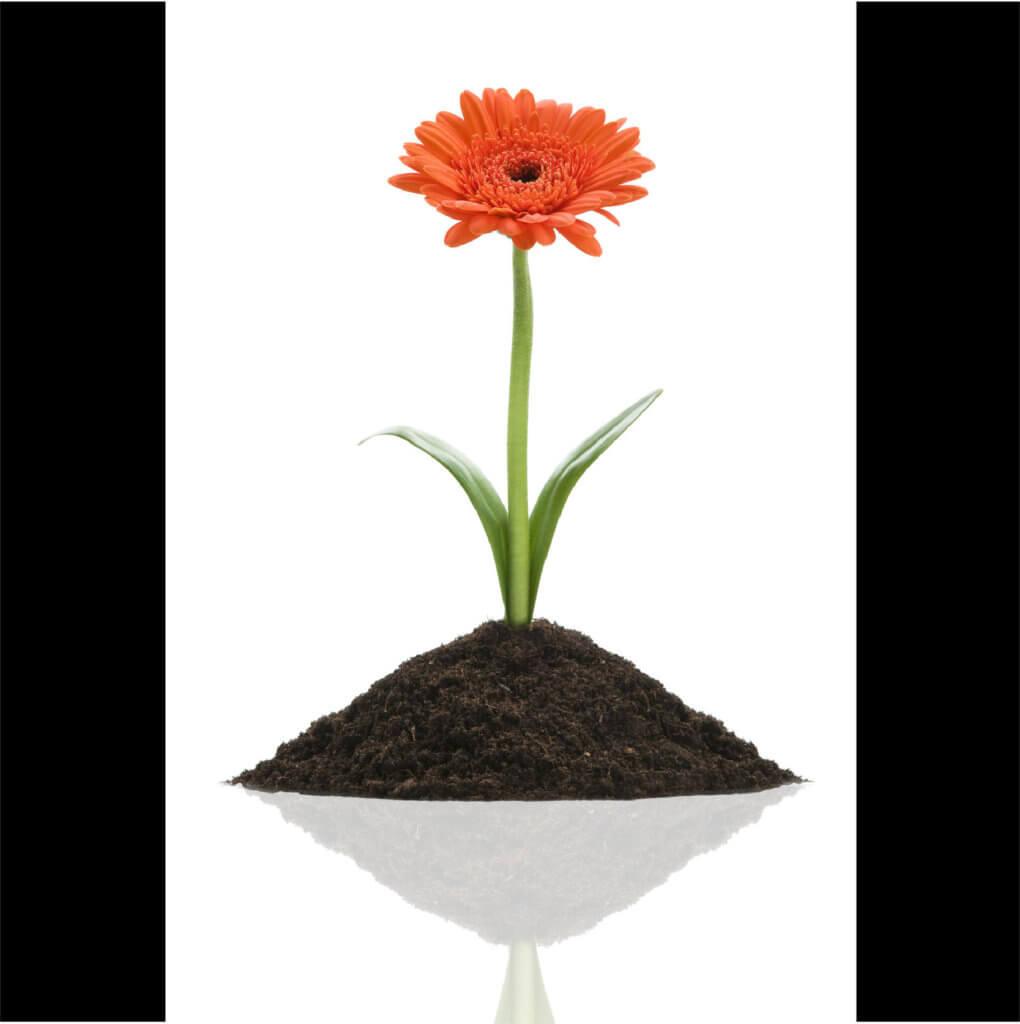 Thriving Orange Flower